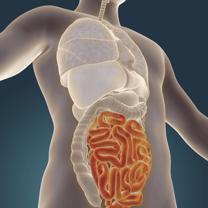 How the condition of your gut is key to your health and wellbeing